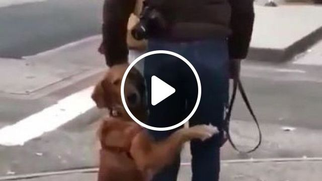 Dog Wants To Travel With A Man On The Street - Video & GIFs | animals & pets, dogs, traveling, men, men's fashion, street
