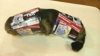Cat entered paper boxes