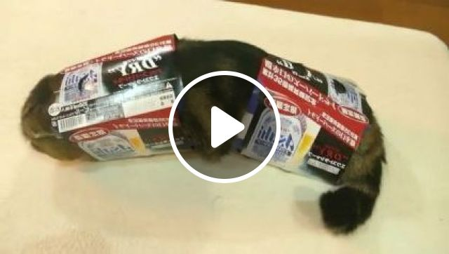 Cat Entered Paper Boxes - Video & GIFs | Animals & pets, funny cats, paper boxes, product containers, transformation robots