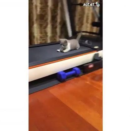 Cat likes to play with treadmill in living room