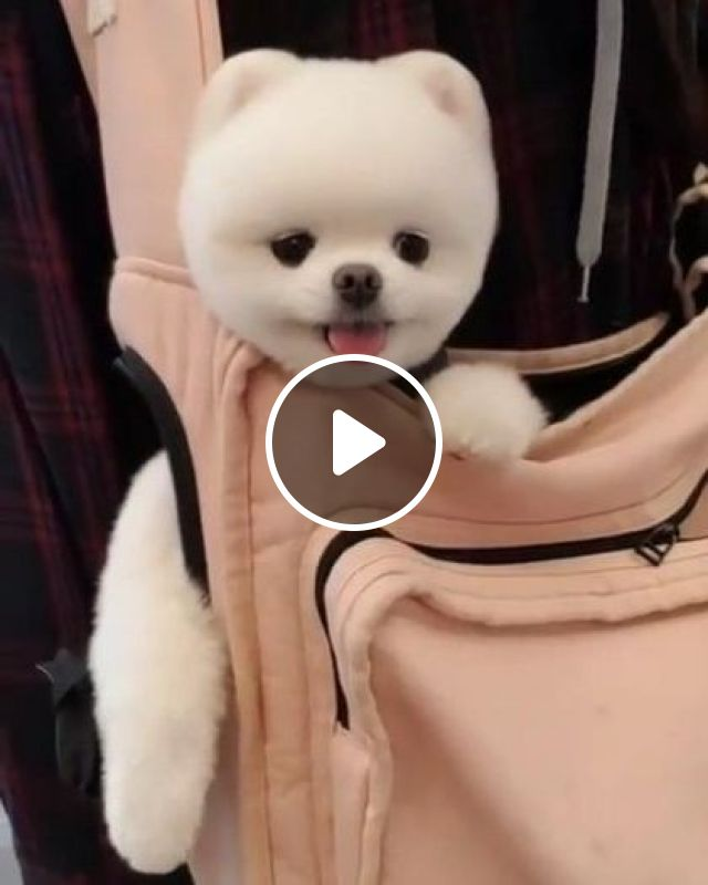 Girl Is Leading Dog To Travel - Video & GIFs   nature & travel, girls, clothes fashion, luxury handbags, tourists