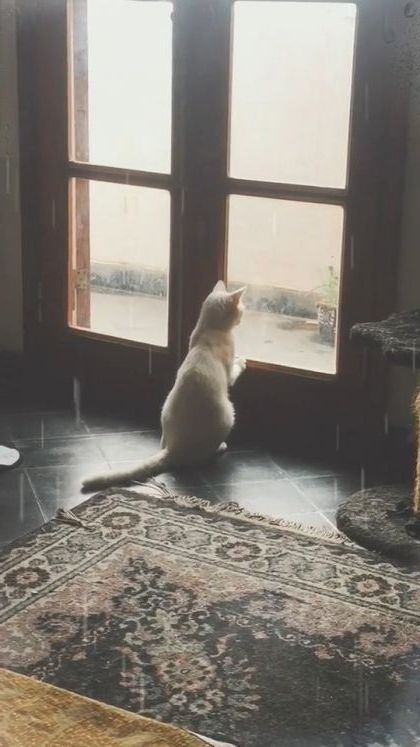 Today very sad cat does not want to go anywhere,cat just wants to sleep at home. - Funny Videos - funnylax.com - animals & pets,cats,cat breeds,bedrooms