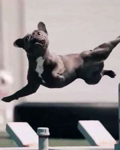 dog practices exercise with man - Video & GIFs | animals & pets,dogs,exercise,fitness,men,fashion sports,sports equipment