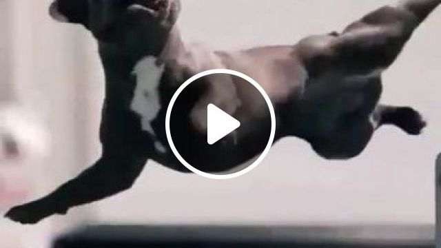 Dog Practices Exercise With Man - Video & GIFs   animals & pets, dogs, exercise, fitness, men, fashion sports, sports equipment