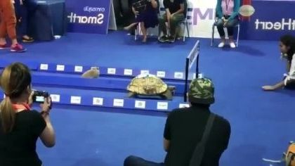 Turtle and rabbit who is faster - Funny Videos - funnylax.com - animals & pets,turtles,rabbits,races,live tv,camera,high definition,smart vandalism,television
