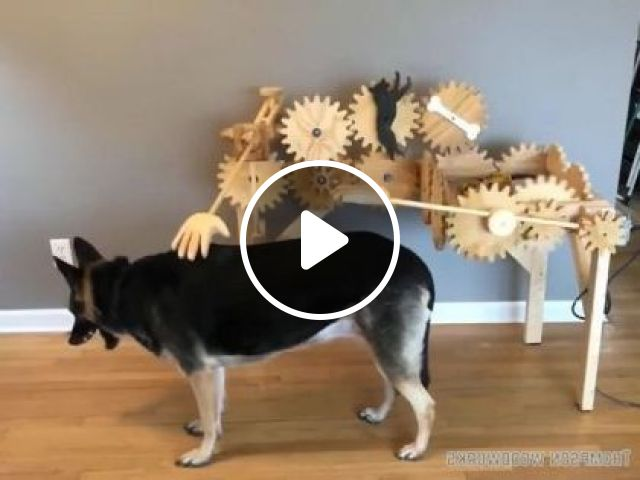 Automatic Hair Care Machine For Pets - Video & GIFs | animals & pets, automatic hair care machines, technology, dog breeds, pet health, pet care