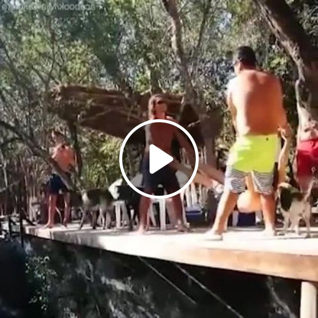 Tourists Are About To Jump Into Sea - Video & GIFs | nature & travel, tourists, sea, animals, dogs