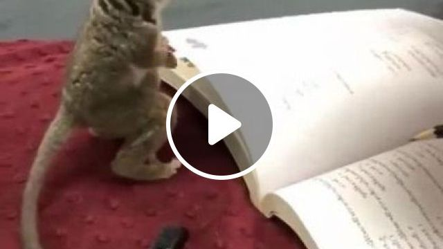 Animals Can Also Be Very Intelligent If Well Educated - Video & GIFs   animals & pets, smart, well educated