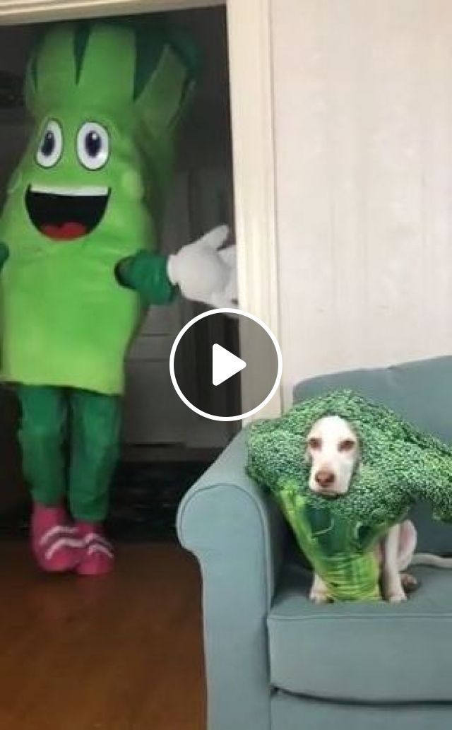 What Does Dog Think Of Apartment's Living Room? - Video & GIFs | animals & pets, dogs, dog breeds, living rooms, apartments, furniture