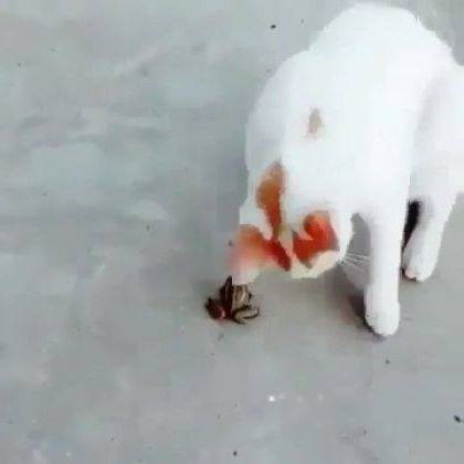 Cat and frog are friends