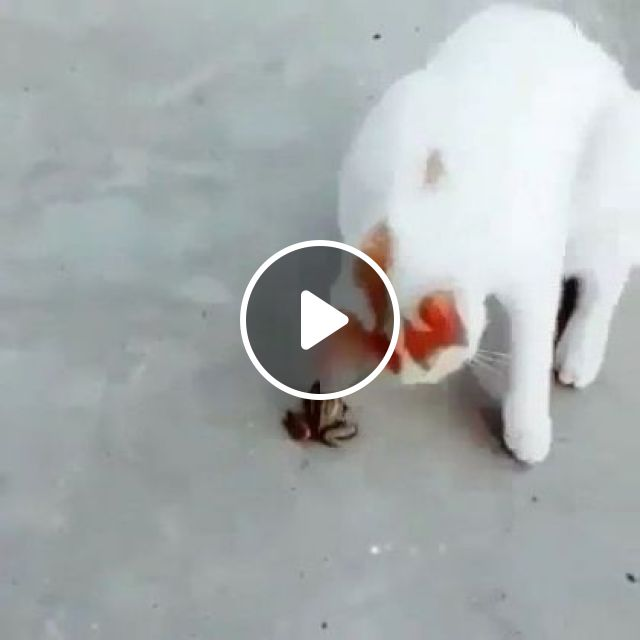 Cat And Frog Are Friends - Video & GIFs   animals & pets, cats, frogs, pet care