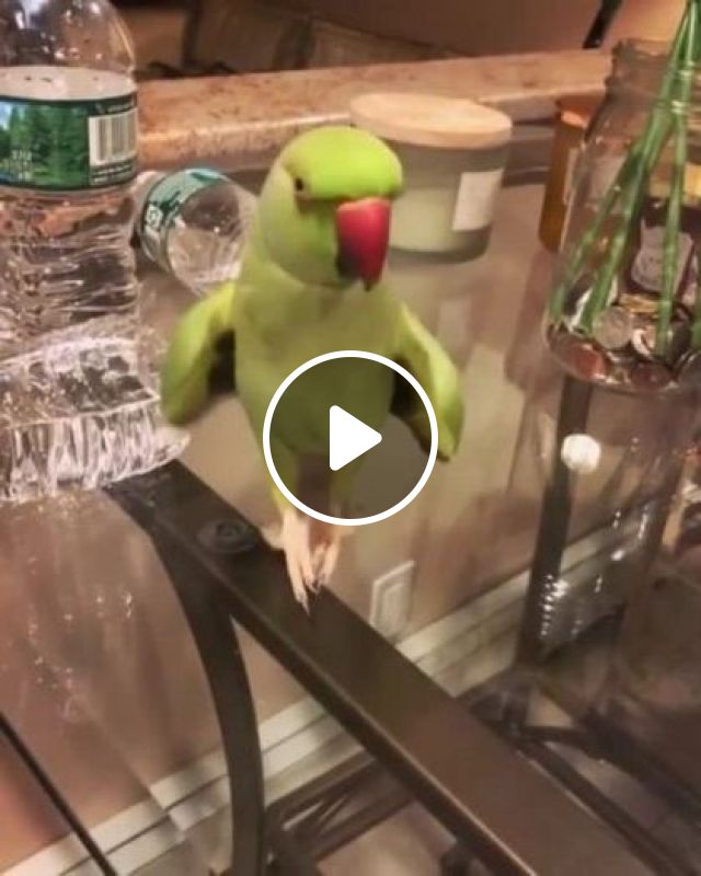Parrot Dance Reduces Stress And Is Good For Health - Video & GIFs | animals & pets, parrots, life, dancing, stress relief, good for health