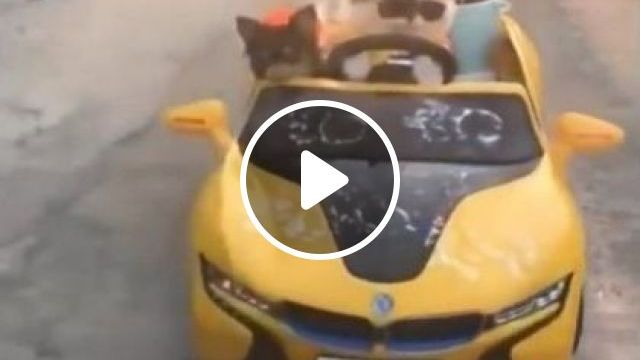Cat And Dogs Together On A Luxury Car - Video & GIFs | animals & pets, cats, dogs, dog breeds, luxury cars, travel