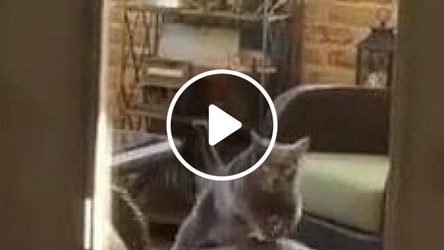 Smart cat practicing exercise to lose weight in  living room - Funny Videos - funnylax.com - animals & pets,cats,smart,exercise,fitness,weight loss,good for health,living room