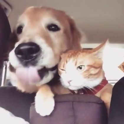 For first time a cat can travel with a dog by car