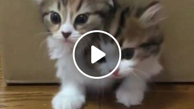 Why My Kittens Like Carton - Video & GIFs   animals & pets, kittens, cats, cat breeds, lovely, cartons