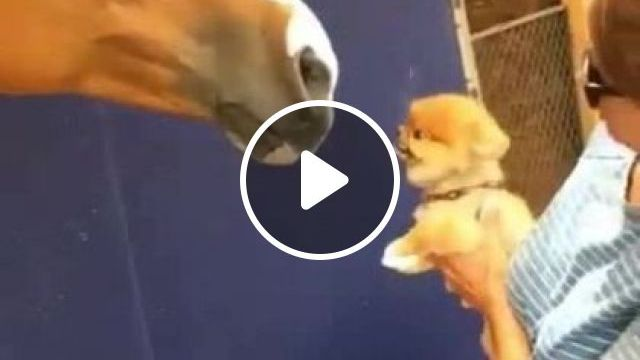 Puppy And Horse - Video & GIFs | animals & pets, dogs, dog breeds, friendly