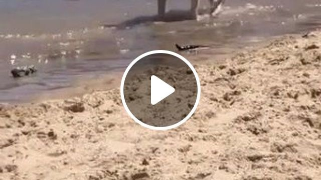 Cool Dog Traveling Sea - Video & GIFs | animals & pets, dogs, dog breeds, travel, sea