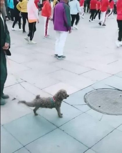 dog also wants to exercise like everyone else