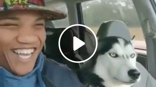 Man Traveling With Dog Everywhere By Car - Video & GIFs | nature & travel, men, men's fashion, tourists, dogs, dog breeds, luxury cars
