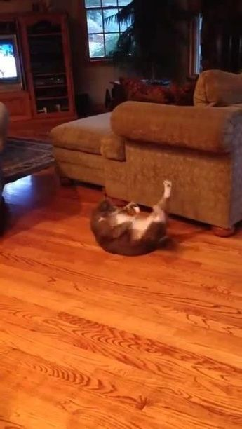 In  apartment,cat is too fat to exercise and lose weight and protect health - Funny Videos - funnylax.com - animals & pets,cats,cat breeds,exercise,weight loss,good for health,apartments,furniture