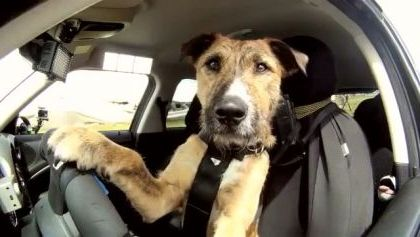 World's First Driving Dog