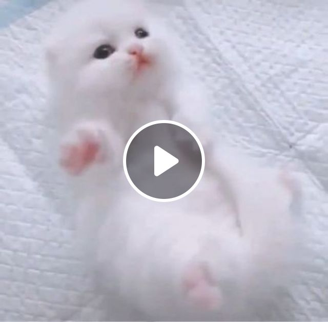 Kitten With White And Smooth Fur In Pet Care Center - Video & GIFs | animals & pets, kittens, cat breeds, pet care centers