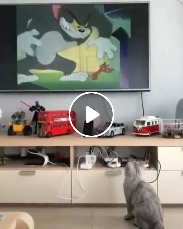 Cat Is Watching Cartoons On The Big Screen TV In Apartment - Video & GIFs | animals & pets, cats, cat breeds, watching, cartoons, widescreen televisions, apartments, luxurious furniture