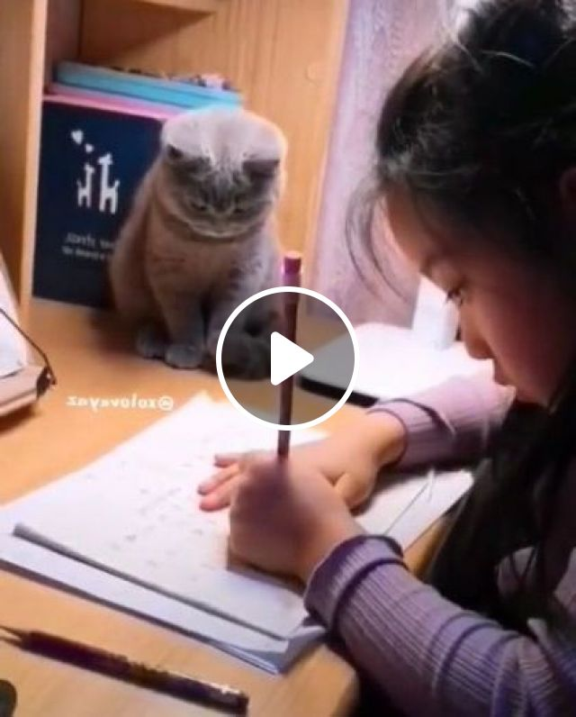 Cat Wants To Play With Kid In Living Room - Video & GIFs | animals & pets, cats, cat breeds, children, fashion children, living rooms, furniture, apartments