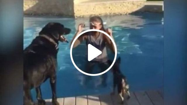 Little Yorkie Found Her Own Private Surfboard In Pool - Video & GIFs | animals & pets, dogs, dog breeds, swimming pools, resorts
