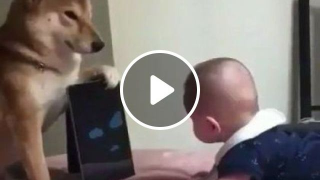 Smart Dog Holds Baby's Tablet In Apartment's Bedroom - Video & GIFs | animals & pets, dog, smart, tablet, baby, bedroom, apartment, luxurious interior