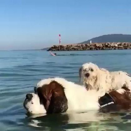 My dogs today travel to sea