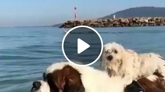 My Dogs Today Travel To Sea - Video & GIFs | animals & pets, dogs, dog breeds, sea travel, tourists, cameras, videos
