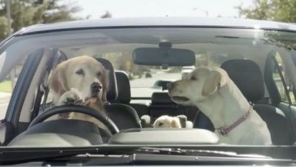 Dogs behind  wheel on the street - Funny Videos - funnylax.com - animals & pets,dogs,dog breeds,luxury cars,street