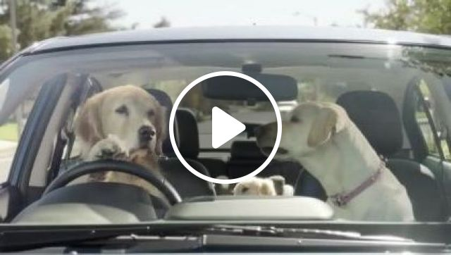 Dogs behind wheel on the street, animals & pets, dogs, dog breeds, luxury cars, street