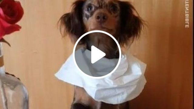 My Dog Goes To Eat Restaurant - Video & GIFs   animals & pets, dogs, dog breeds, restaurants, travel, delicious food
