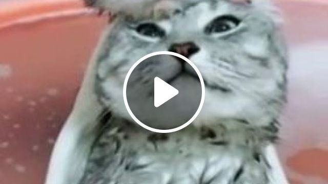 Cats In A Basin Of Water - Video & GIFs | animals & pets, kittens, cat breeds, plastic water pots