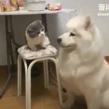 Dog and cat playing in kitchen - Video & GIFs | animals & pets,dogs,cats,play,kitchen,kitchen equipment,furniture,apartments