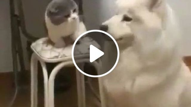 Dog And Cat Playing In Kitchen - Video & GIFs   animals & pets, dogs, cats, play, kitchen, kitchen equipment, furniture, apartments