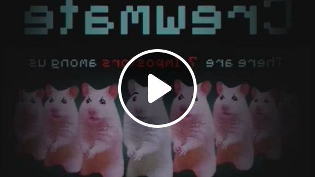 Among Us, But With Hamsters - Video & GIFs   syrian hamster, hamster, cute hamsters