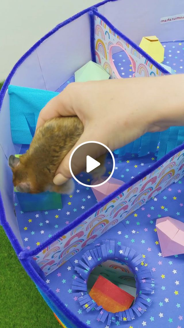 Hamster In 6 - Level Rainbow Maze - Video & GIFs   cute hamsters, baby hamster, hamster