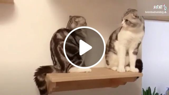 Surprised Cat - Video & GIFs | animals & pets, cute cats, cute animals, caring animals