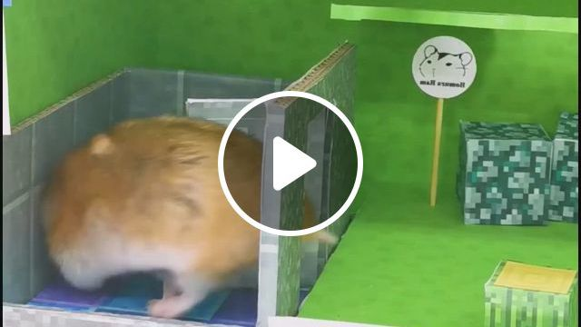 Minecraft House - Video & GIFs | funny hamsters, hamster habitat, cute hamsters